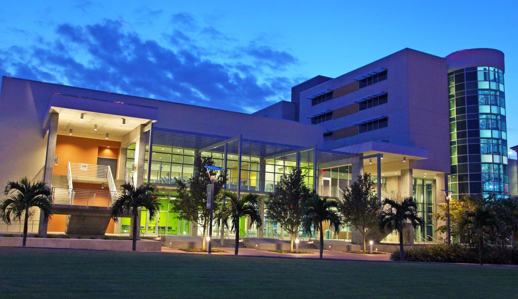 university of south florida st  petersburg