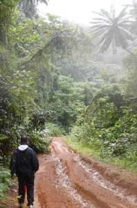 A photograph of a muddy road and surrounding foliage in Cameroon