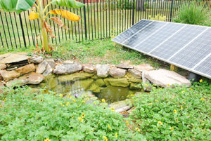 A photo of the pond and solar panel system at the Bayboro Food Forest