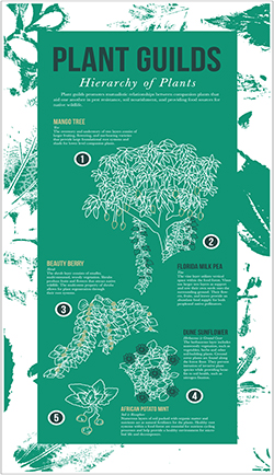 Infographics will educate visitors about sustainable agriculture underlying the Food Forest practices. By Peter Sather, Gabrielle Mena and Iris Liquing.
