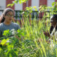 Students Mariah Culhane (left) Garden Club vice president, and Samantha Service (right) club secretary, work in the food forest.