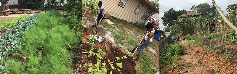 working in urban agriculture