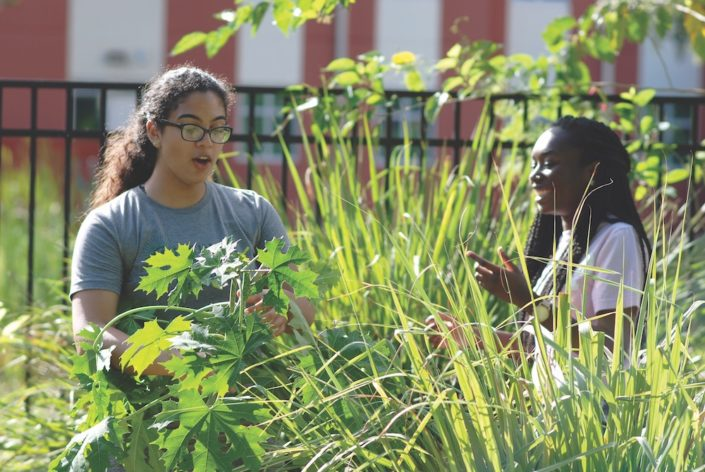 urban agriculture food forest